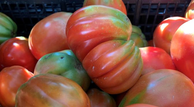 Pomodoro canestrino di Lucca