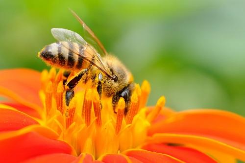 Locandina La vita segreta delle api
